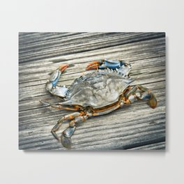 """Busted Peeler"" - Maryland Blue Crab Metal Print"