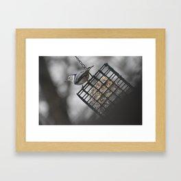 King of the feeder! Framed Art Print