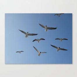 Flying high again Canvas Print