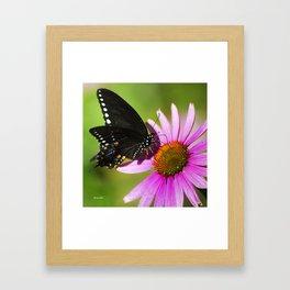 Butterfly V Framed Art Print