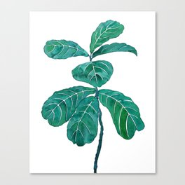 fiddle leaf fig watercolor Canvas Print