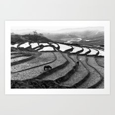 Horses on rice paddies in northern Vietnam Art Print