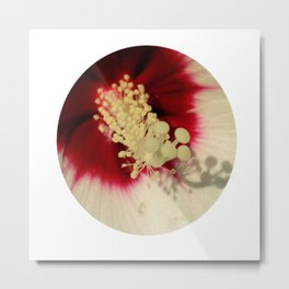 Hibiscus Flower Close Up Photography Floral Art Metal Print