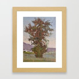 Italian Oak Tree Framed Art Print