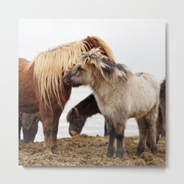 Iceland horses Metal Print