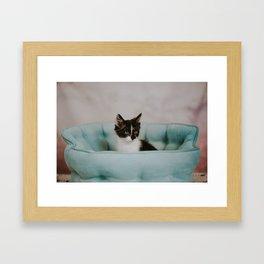 Pristine Kitty Framed Art Print