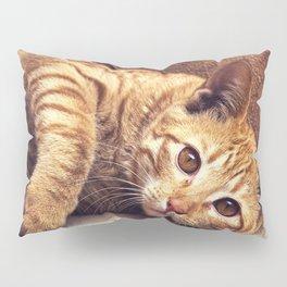 Cat roux Pillow Sham