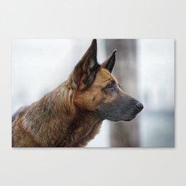 A German Shepherd Canvas Print
