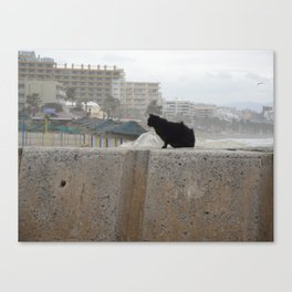 Windswept Cat Canvas Print