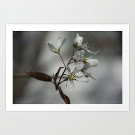The fragile start of spring Art Print