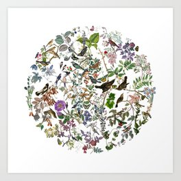 bird menagerie Art Print