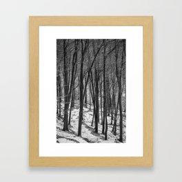 Through the Snowy Beech Wood Framed Art Print