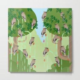 cedar waxwings Metal Print