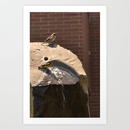 Finches on a Fountain Art Print