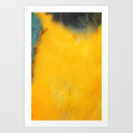 Textura: Parrot Feathers Art Print