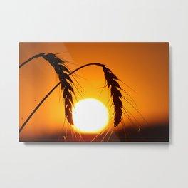 Wheat Sunset Silhouettes Metal Print