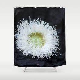 eucalyptus flower Shower Curtain