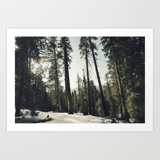 Winter Sequoia Forest Art Print