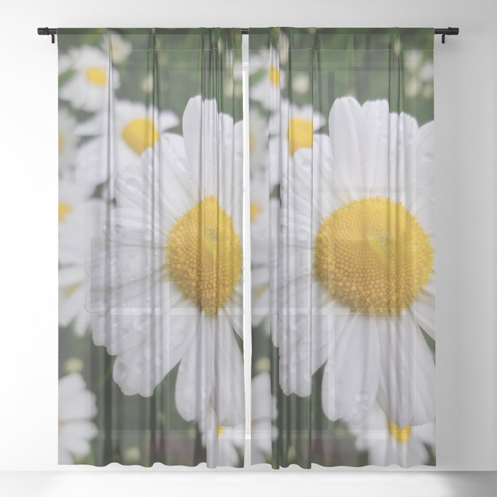Flower Photography by Tina Rae Sheer Curtain