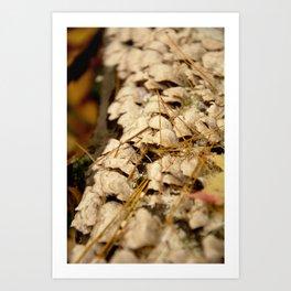 2015-10-23 - 0009 Art Print