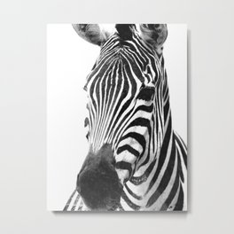 Black and white zebra illustration Metal Print