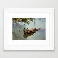 turtles Framed Art Prints featuring Turtles by Black Rose Photography