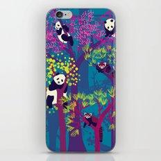 Both Species of Panda - Blue iPhone & iPod Skin