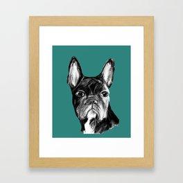 French Bulldog. Teal  Framed Art Print