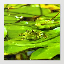 Frog On A Lily Canvas Print