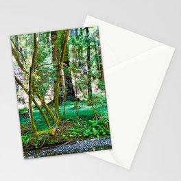 Muir Woods Study 11 Stationery Cards