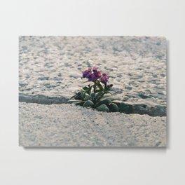 Purple Flowers in Concrete Metal Print