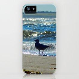 Gull at the Beach iPhone Case