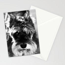 Black & White Minature Dog Stationery Cards