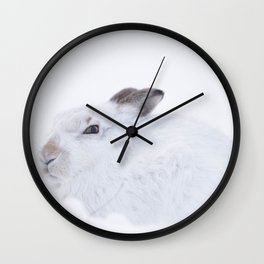 white mountain hare (lepus timidus) sitting on snow Wall Clock