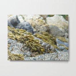Seaweed Series 1 Metal Print