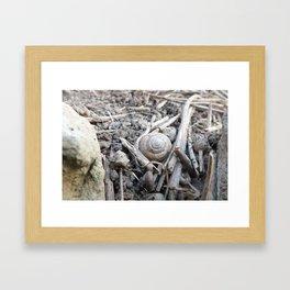 Mollusk Tombstone Framed Art Print