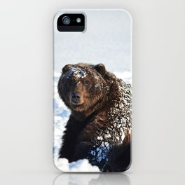 Alaskan Grizzly in Snow iPhone Case