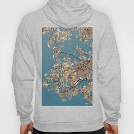 White Spring Blossoms Against Baby Blue Sky Hoody