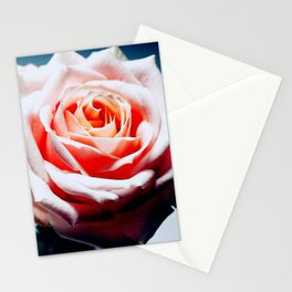 Adorable White and Pink Rose Stationery Cards