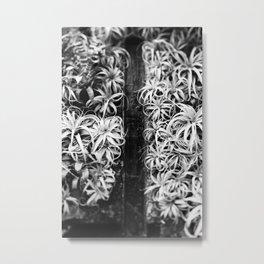 Air Plant Waterfall Metal Print