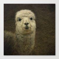 alpaca Canvas Prints featuring Alpaca  by Guna Andersone & Mario Raats - G&M Studi