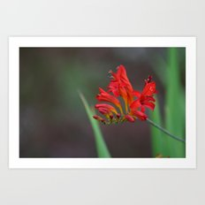 Red Flowers 2 Art Print
