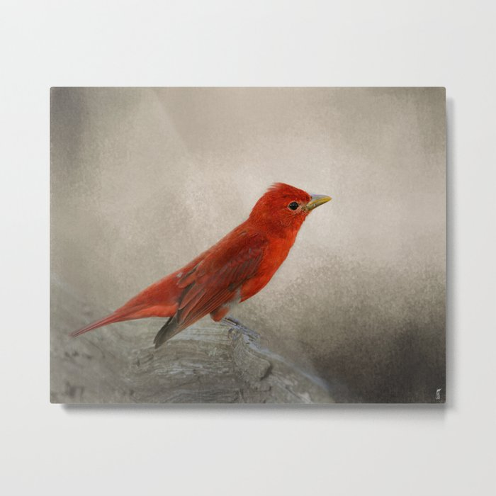 Song of the Summer Tanager 2 - Birds Metal Print
