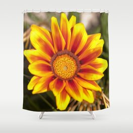Southern African ❁ Yellow Gazania Flower  Shower Curtain