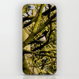 Magpie resting in a tree iPhone Skin