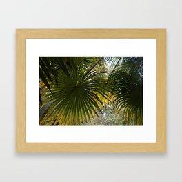 Leaves at Heligan Framed Art Print