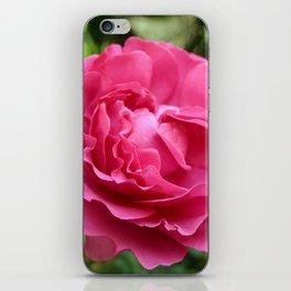 Queen Elizabeth Rose iPhone Skin