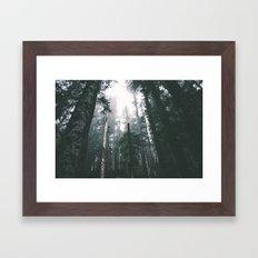 Forest XVIII Framed Art Print