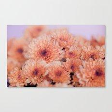 Chrysanthemum flowers 8605 Canvas Print