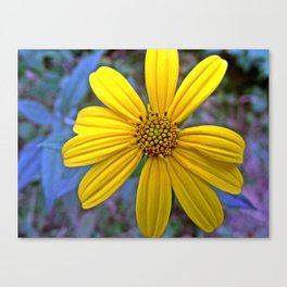 Wild Sunroot Canvas Print